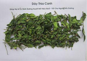 Diễn đàn rao vặt: Dây thìa canh khô chữa tiểu đường hiệu quả Day-thia-canh-loai-dep-300x210